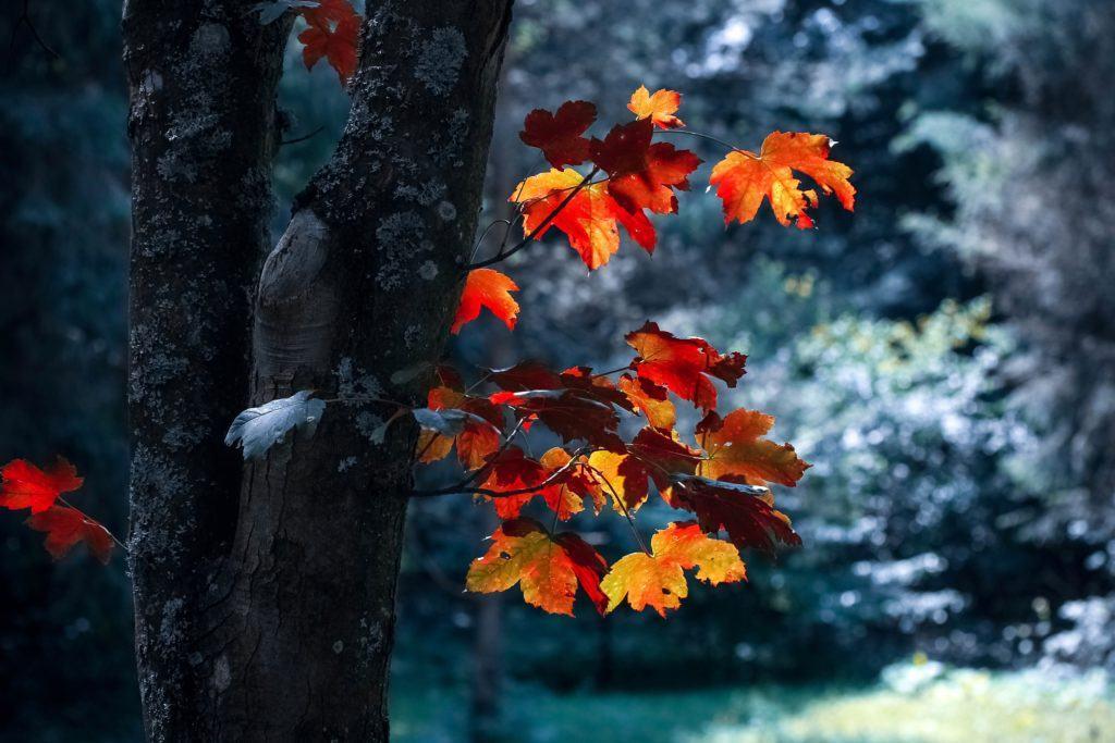 arborist edmonton