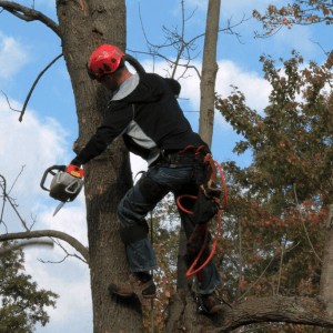 Arborists edmonton