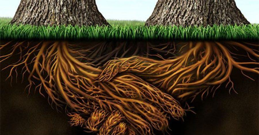 The-Symbiotic-Life-Of-Trees-FEATURE