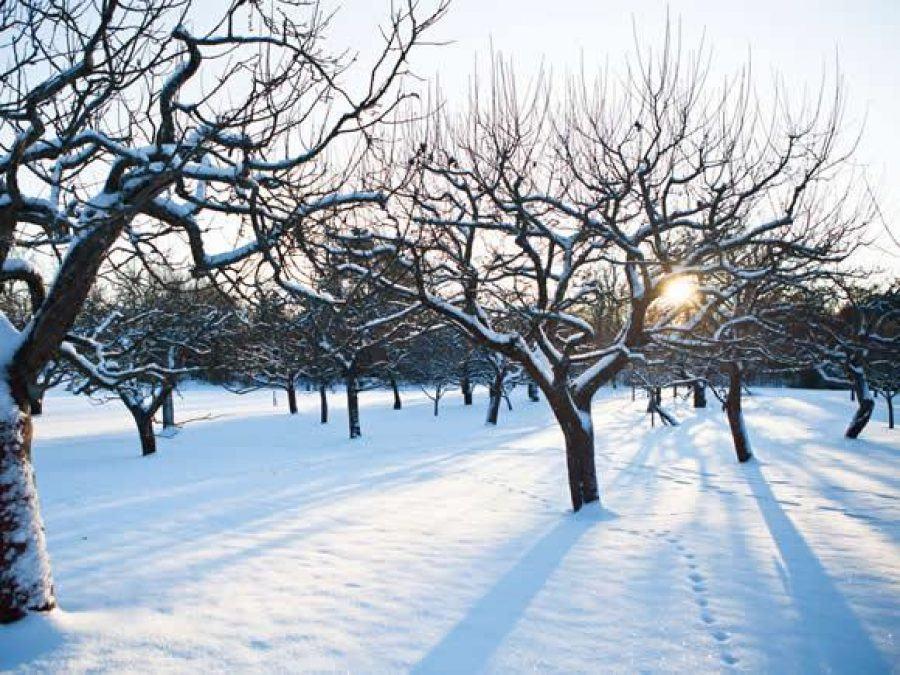 Winter Tree Care 101 IMAGE