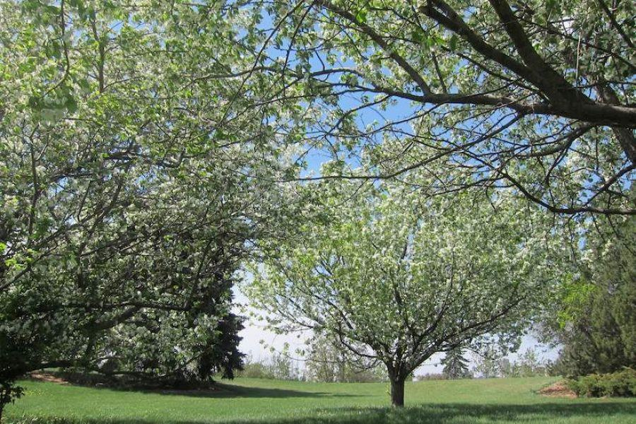 pruned_tree